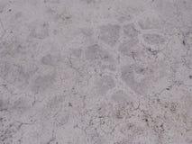 Witte kleur van de cement de oude textuur Stock Afbeeldingen