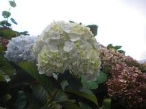 Witte kleurenbloemen en achtergrond stock afbeelding