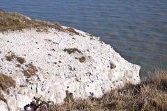 Witte klippen van Dover Stock Foto