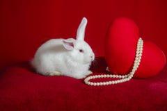 Witte konijn en hart witte parels Stock Afbeeldingen