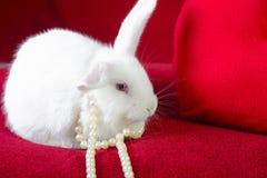 Witte konijn en hart witte parels Royalty-vrije Stock Foto's