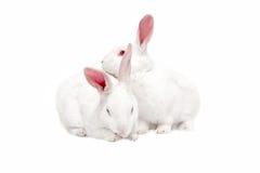 Witte konijntjes op wit Royalty-vrije Stock Afbeelding