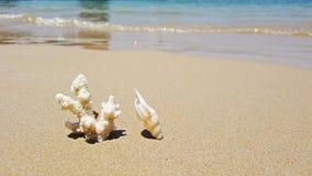 Witte koraal en overzeese shell op het strand en overzeese van het eilandzand golven stock video