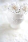 Witte korenbloemen in witte vaas royalty-vrije stock afbeeldingen