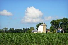 Witte Landbouwbedrijfcornfield stock afbeelding