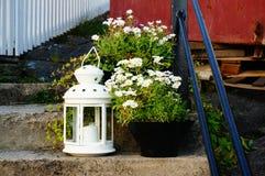 Witte lantaarn dichtbij witte bloemen, Noorwegen Royalty-vrije Stock Fotografie