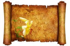Witte lelie op oud document Stock Foto's