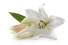 Witte leliebloemen Stock Foto
