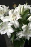 Witte Lelies Stock Foto