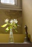Witte lelies Royalty-vrije Stock Afbeelding
