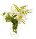 Witte lelies 'bos royalty-vrije stock fotografie