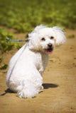 Witte leuke hond op de weg Stock Foto's