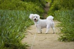 Witte leuke hond op de weg Royalty-vrije Stock Afbeelding