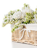 Witte lilac bloemen in een geïsoleerde mand Royalty-vrije Stock Foto's
