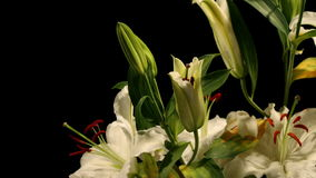 Witte Lily Timelapse stock footage