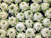 Witte Lotus-mooie bloem stock foto