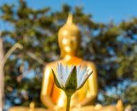 Witte lotusbloem en gouden Boedha Royalty-vrije Stock Afbeelding