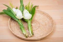 Witte lotusbloembloem Stock Afbeelding