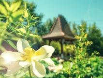 Witte lotusbloembloem op de achtergrond van een pagode Royalty-vrije Stock Afbeelding
