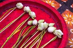 Witte lotusbloembloemen op rood dienblad Royalty-vrije Stock Foto