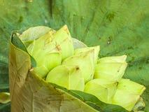 Witte lotusbloemknoppen Royalty-vrije Stock Fotografie