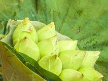 Witte lotusbloemknoppen Stock Foto's