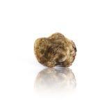 Witte magnatumpico van de truffelknol van Alba, Italië Stock Foto's
