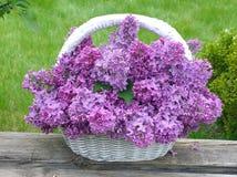 Witte mand met lilac bloemen op een groene achtergrond Royalty-vrije Stock Foto's