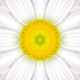 Witte Mandala Concentric Flower Center Kaleidoscope stock fotografie