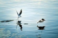 Witte meeuwenvlieg over het water op een de zomerdag stock foto