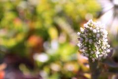 Witte mooie Afrikaanse bloem op een zonnige dag royalty-vrije stock foto's