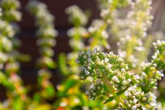Witte mooie Afrikaanse bloem op een zonnige dag stock afbeelding
