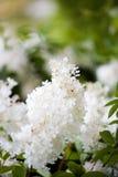 Witte mooie bloem Royalty-vrije Stock Foto's