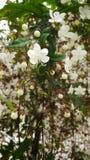 Witte mooie bloemen Stock Foto's