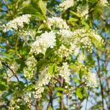 Witte mooie bloemen op blauwe hemelachtergrond stock fotografie