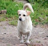 Witte mooie hond stock foto