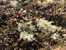 Witte mos en struik Royalty-vrije Stock Afbeeldingen