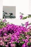Witte muren en roze bougainvillea royalty-vrije stock foto