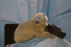Witte naakte rust op ijsberg Stock Afbeelding