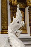 Witte naga met zwart oog Royalty-vrije Stock Foto