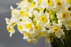 Witte narcissen De lentebloem op retro lijst Modieus bureau Plaats voor ingangen Plaats voor de inschrijving Boeket Stock Afbeelding