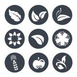 Witte natuurlijke symbolen - aard abstract element met blad, appel, bloem en aartje, bio organisch eenvoudig ontwerp in de cirkel Royalty-vrije Stock Afbeelding