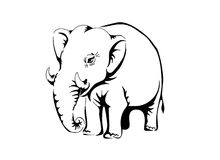 Witte olifant Stock Foto
