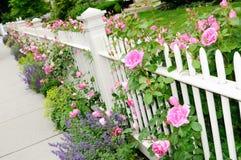 Witte Omheining en de Roze Close-up van Rozen stock afbeeldingen