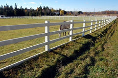 Witte Omheiningen - Paard Stock Foto's