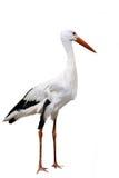 Witte Ooievaar op wit Stock Foto