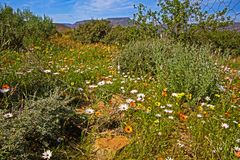 Witte, Oranje en Gele Wildflowers in Vallei stock fotografie