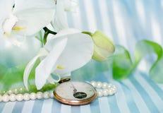 Witte orchidd stock afbeeldingen