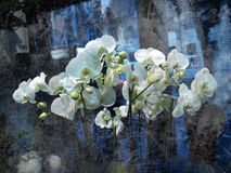 Witte orchideeën Royalty-vrije Stock Afbeeldingen