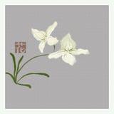 Witte orchideeën Royalty-vrije Stock Fotografie